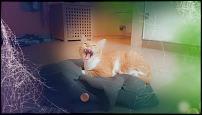 Klicken Sie auf die Grafik für eine größere Ansicht  Name:Garfield Zähne.jpg Hits:12 Größe:43,6 KB ID:13610