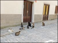 Klicken Sie auf die Grafik für eine größere Ansicht  Name:18-Katze.jpg Hits:19 Größe:56,2 KB ID:10521