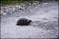 Klicken Sie auf die Grafik für eine größere Ansicht  Name:28-Schildkröte1.jpg Hits:26 Größe:78,2 KB ID:10531