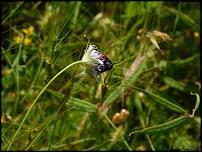 Klicken Sie auf die Grafik für eine größere Ansicht  Name:48-Schmetterling2.jpg Hits:18 Größe:58,9 KB ID:10557