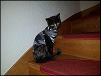 Klicken Sie auf die Grafik für eine größere Ansicht  Name:Catsuit.jpg Hits:18 Größe:68,6 KB ID:11949